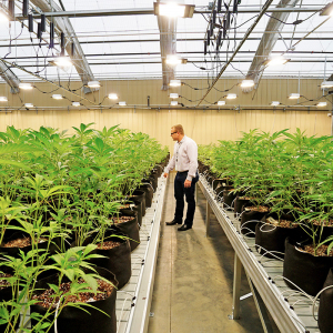 Bold Team Provides Peek at Arkansas' First Legal Pot Operation