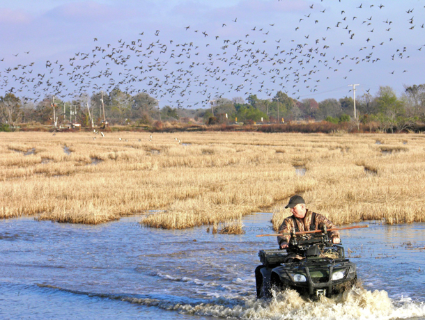 It is clear ducks like rice fields for the food and habitat, but scientists are still trying to figure out why the ducks seem to be attracted to some fields over others.
