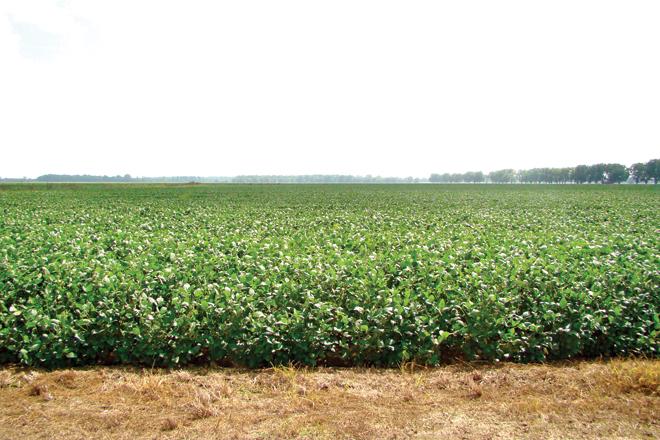 Arkansas Farmers Sue Over Crop Damage Blamed on Dicamba