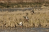 Heads Up Arkansas Duck Hunters; Ratoon Rice Crop Might Land You In Trouble