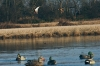 Various Groups Back Waterfowl Hunting on Rolled Rice Fields
