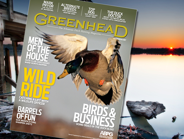 greenhead-blog-cover-610.jpg