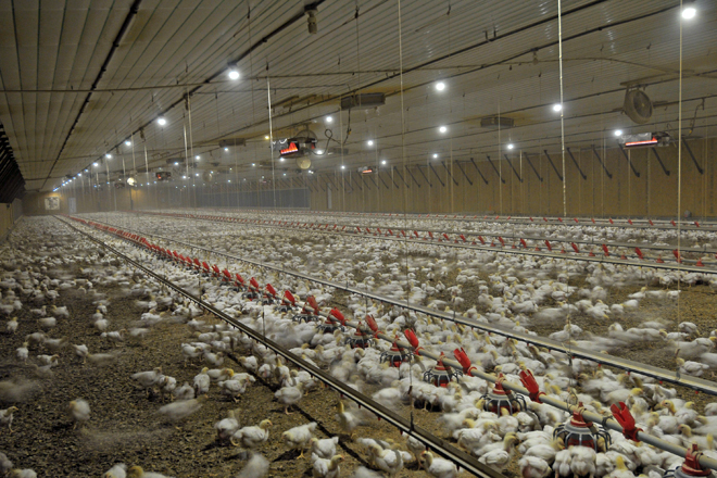 New Agriculture Department Standards Target Pathogens in Poultry Products