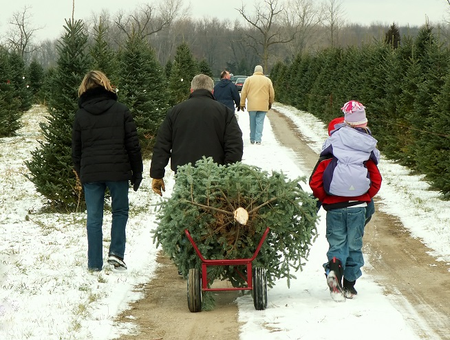 Christmas Tree Farm, Chop Your Own Christmas Tree