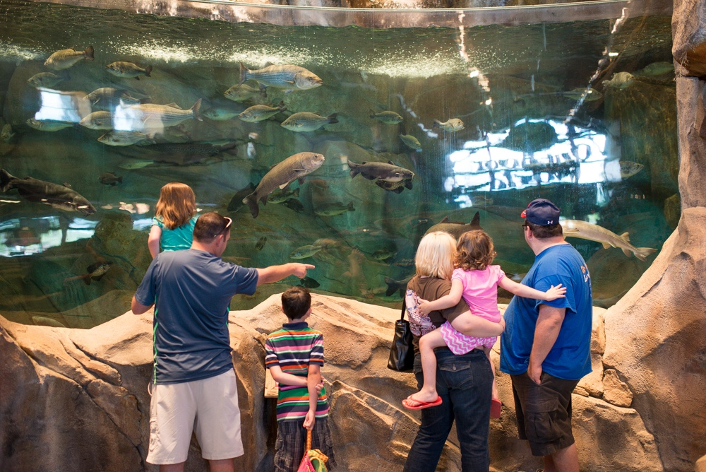 Family summer camps at bass pro shops archery fishing for Bass pro shop fishing