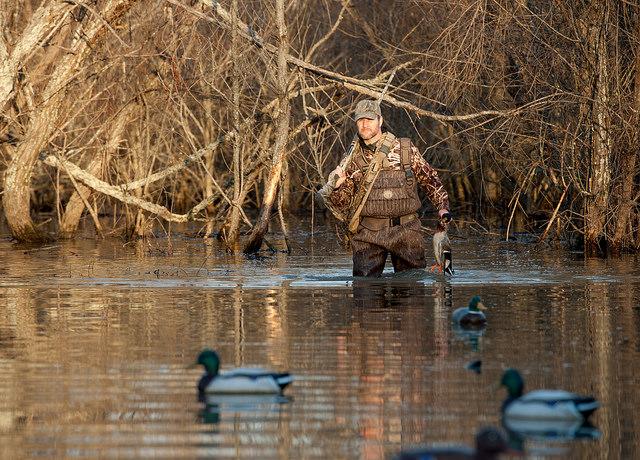Arkansas duck season dates