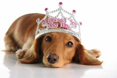 Paws on the Runway Set for May 12