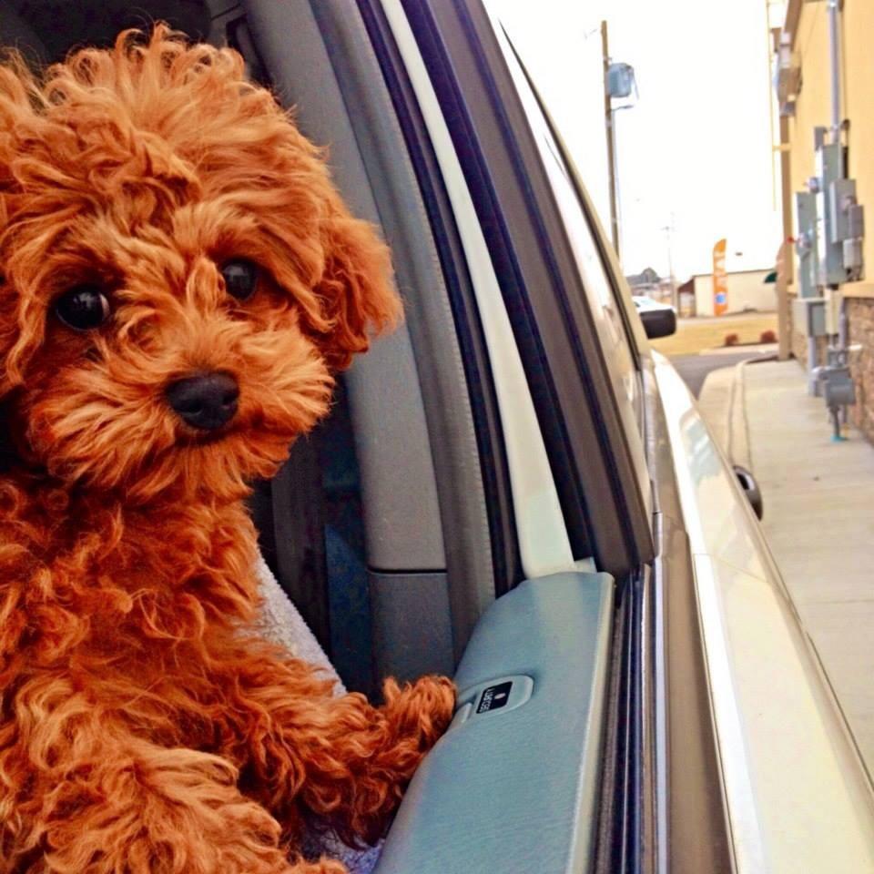 Best Dog Boarding Little Rock