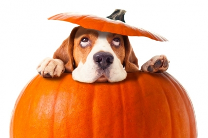 10 Events for Weekend Fun: Pooches & Pumpkins, Razorbacks and More