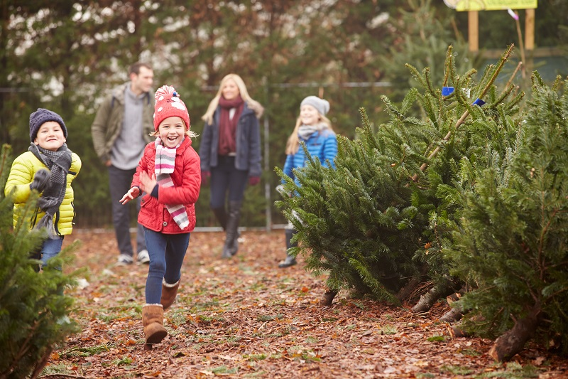 Christmas tree farm, family, where to buy christmas trees