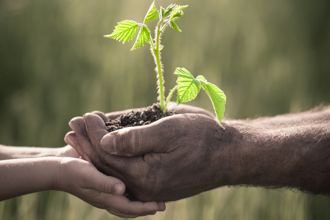 Plant-A-Seed Program Sees Growth in Camden (Honorable Mention in ...