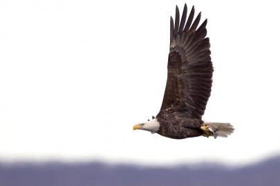 Eagle Exploration: 4 January Events at Arkansas State Parks