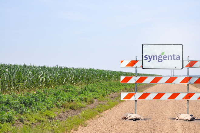 Syngenta Corn Case Settled for $1.51B