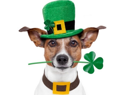 8 St. Patrick's Day Events for Central Arkansas Families