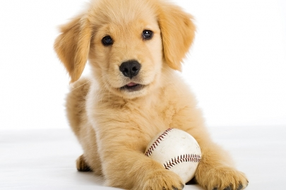 Bring Your Pup to Bark in the Ballpark at Dickey-Stephens Park April 30