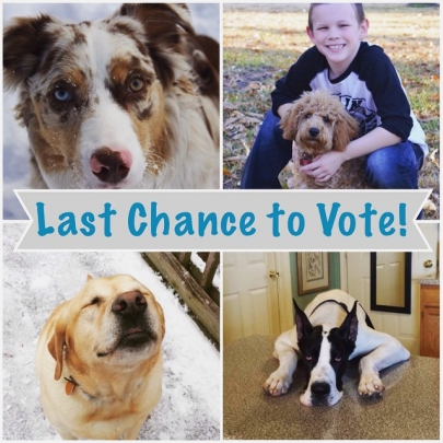 Last Chance! Vote for Little Rock Family's Cutest Family Pet