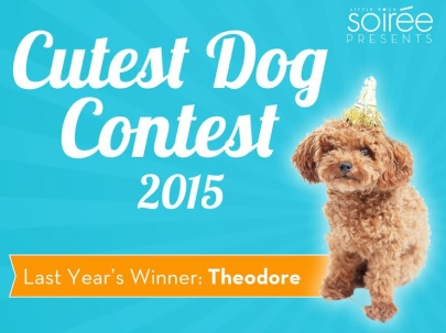 Vote on the Top 25 Finalists in Soirée's Cutest Dog Contest