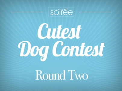 Last Chance to Vote on Top 25 Cutest Dogs