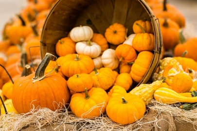 16 Pumpkin Patches in Central Arkansas to Visit this Fall