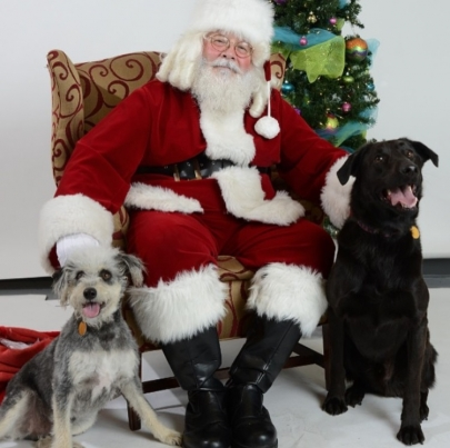 Pet Pics: Where to Get Your Dog's Photo with Santa