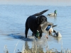 Arkansas Duck Season Off to a Sluggish Start