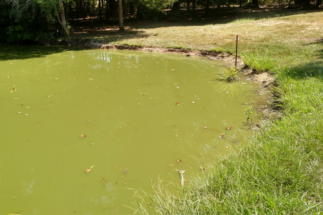 Pond Turnovers, Fish Kills an Inconvenient Possibility During Summer Season