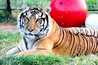 5 Wild Animal Destinations to Explore in Arkansas