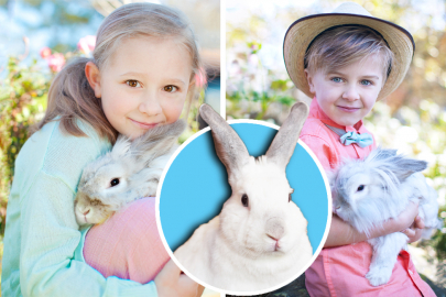 Arkansas Pet Rabbit Network All Ears to Adoption