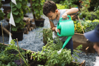 School Garden Competition Offers Cash Prizes