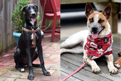 Say 'Hello' to Cora and Scarlett: Your New Best Fur Friends