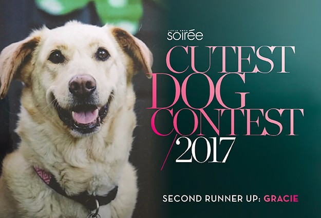 Cutest Dog Contest Today Show