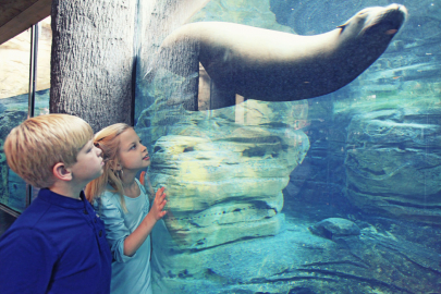 8 Family Daytrip Destinations in Memphis