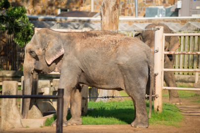 Zoo Hosts Back-to-School $1 Admission Day