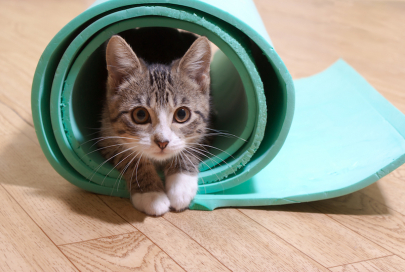 Blue Nyla Yoga to Host Kitten Yoga Class and Adopt-a-Thon