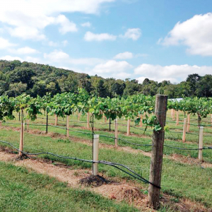$2M Rusty Tractor Vineyards In the Works For Southwest Little Rock
