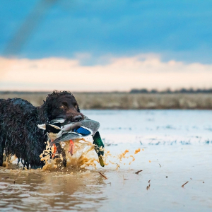 PICTORIAL: Funny, You Don't Look Like a Duck Dog