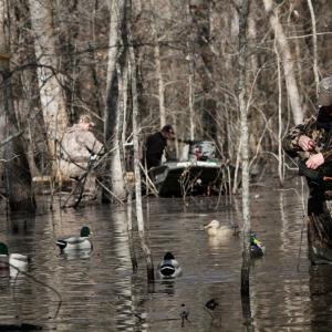 Rainfall, Sporadic Numbers Affecting Duck Season